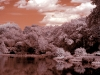 The Lake (infrared) - Central Park